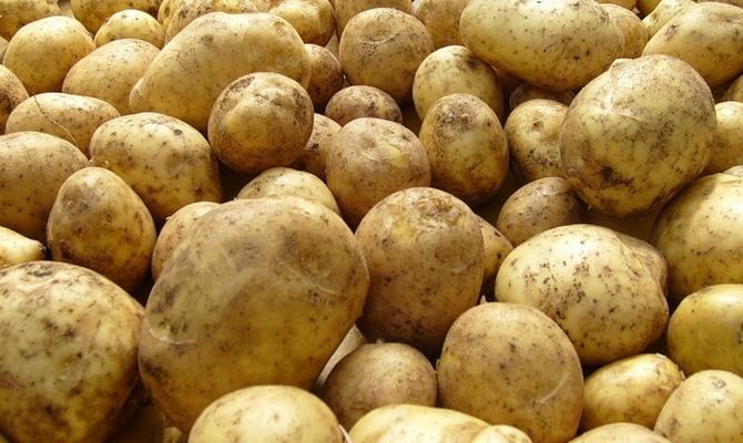 Описание сорта картофеля каратоп, его характеристика и выращивание. Картофель сорта каратоп стал работой немецкой селекции. Сверхраннее растение успешно выращивают в россии. Положительные отзывы подтверждают урожайность и хороший вкус. Описание сорта картофеля санте, его.
