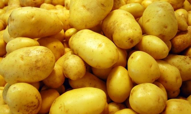Плоды картофеля Зекура