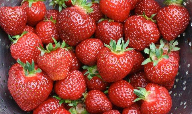 Вкусные и сладкие ягоды клубники