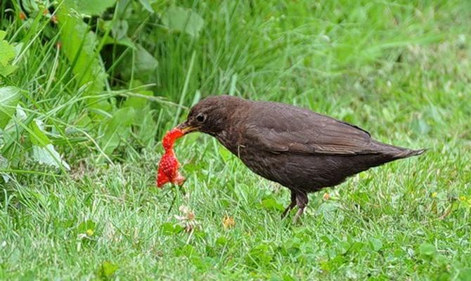 Способы избавиться от птиц на грядках