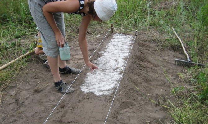 Как сажать севок в зиму 16
