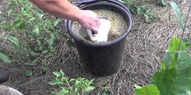 Удобрение жидкий коровяк