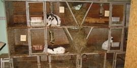 Фото сарай для кроликов