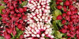 Урожайность редиса в теплице