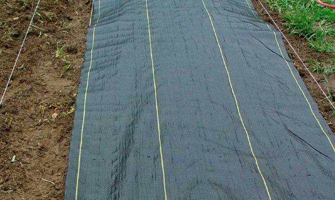 Накрытие плантации полиэтиленовой пленкой