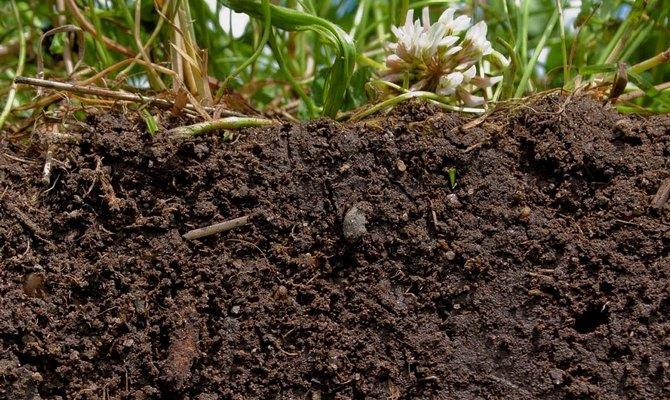 Подходящая земля для высадки клубники
