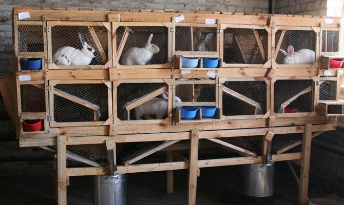 Как построить в домашних условиях клетки для кроликов