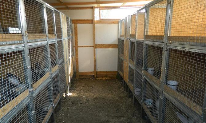 Клетки для кроликов своими руками в помещении