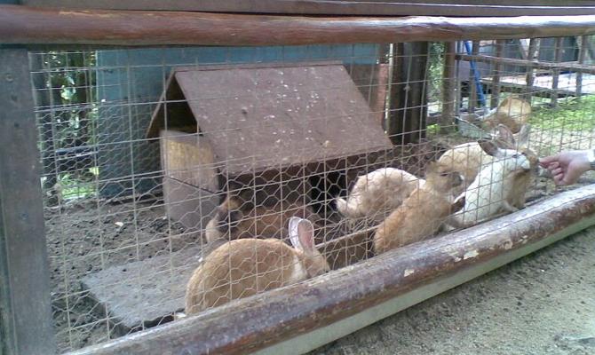 Требования к условиям содержания кроликов фото