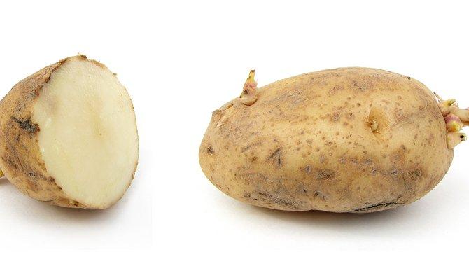 Клубни картофеля для посадки