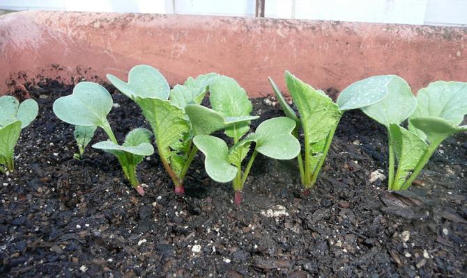 Поддержание определенной степени содержания жидкости в почве