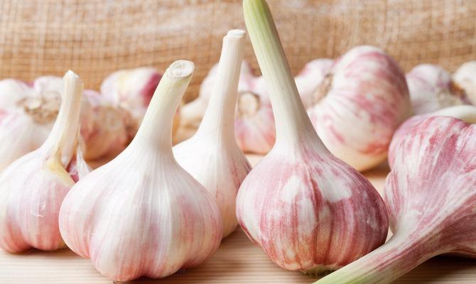 Польза чеснока при похудении