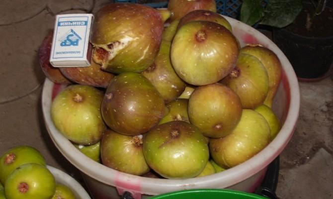Подходящие для разных регионов сорта и свойства инжира