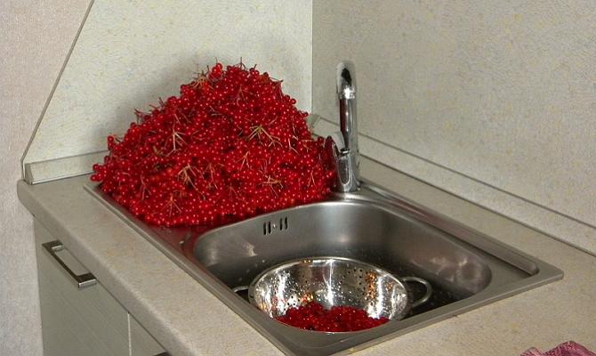 Спелые ягоды для закатки