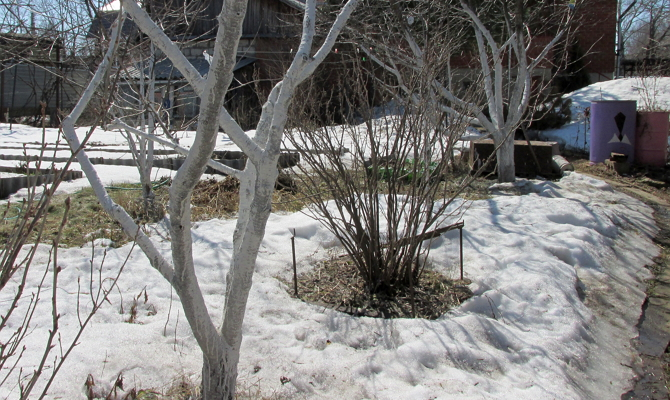 Освобождение земли в саду от снежного покрова