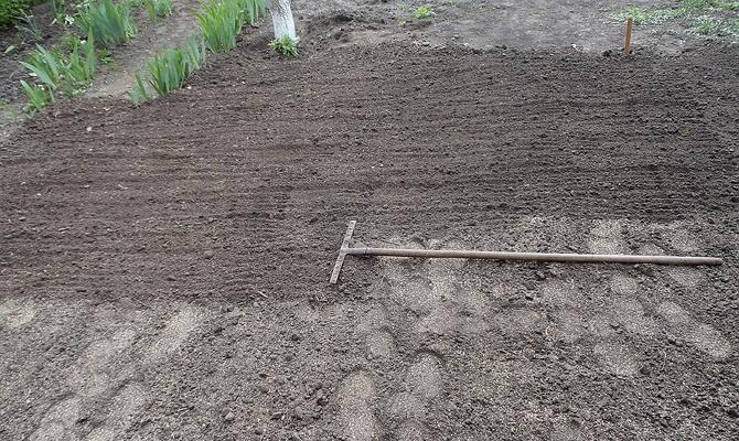 Выравнивание поверхности земли при помощи грабель