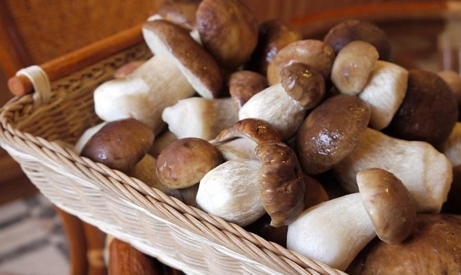 Плотные грибы для заморозки