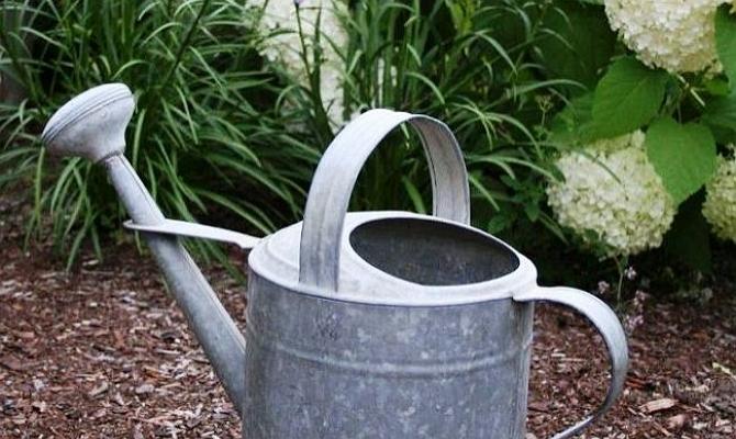 Дождевая вода для полива цветочных кустов