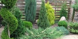 Саженцы декоративных растений и семена – выбираем способ выращивания