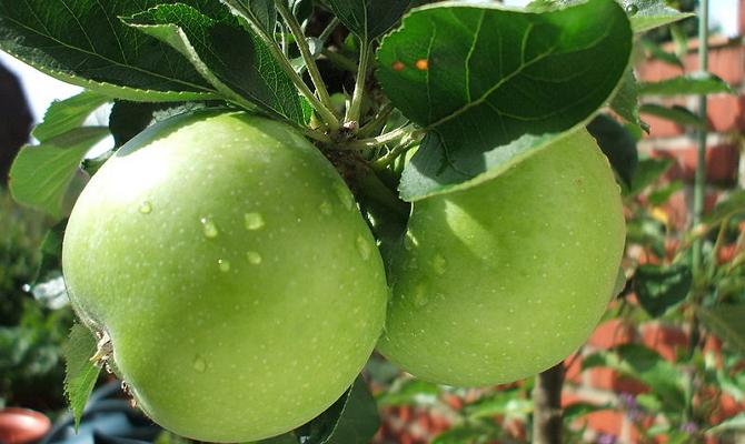 Увлажнение яблонь в весенне-летний период