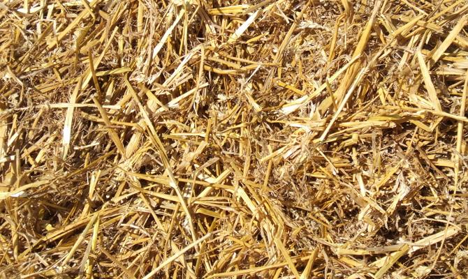 Мульчирование грунта после посадки черенков