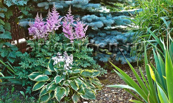 Разнообразие декоративных растений
