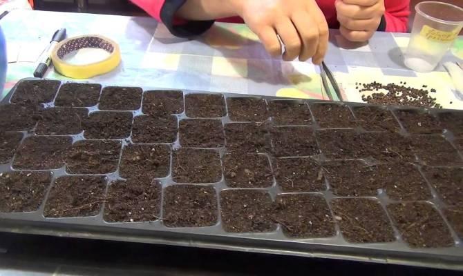 Как для посадки использовать семена?