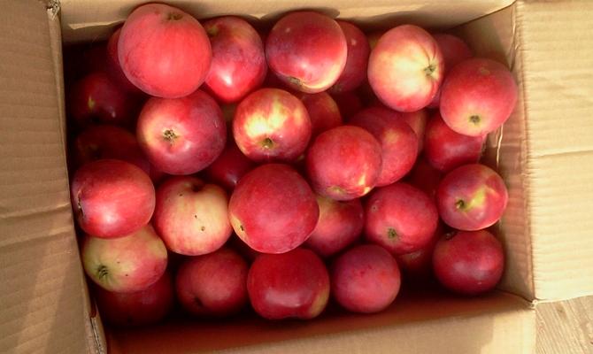 Хранение урожая плодов