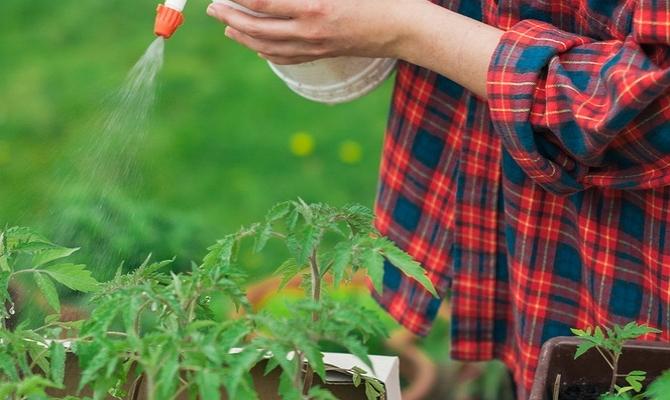 Опрыскивание растений при помощи пульверизатора