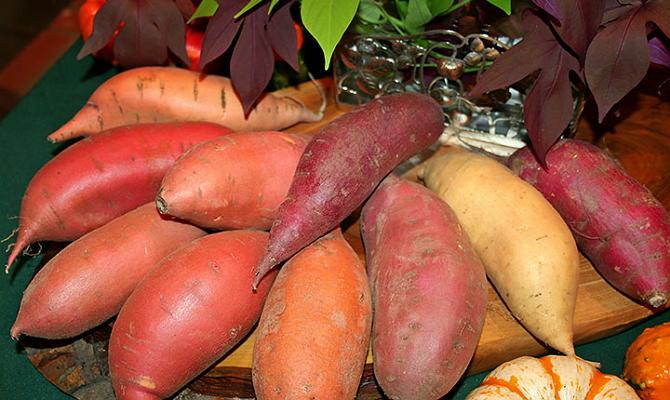 Что такое батат и для чего его выращивать