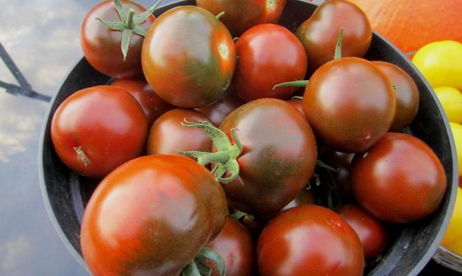 Цветочная закуска из бурых помидоров