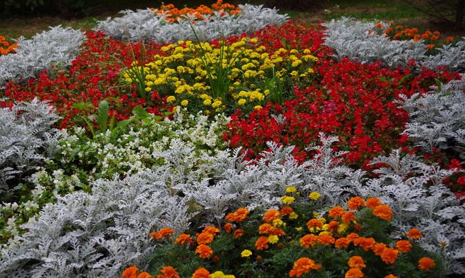 Оформление цветников непрерывного цветения