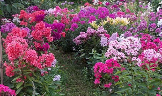 Как оформить клумбы с разным сроком цветения?