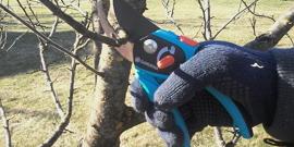 Обрезка яблони осенью – начинающему садоводу на заметку