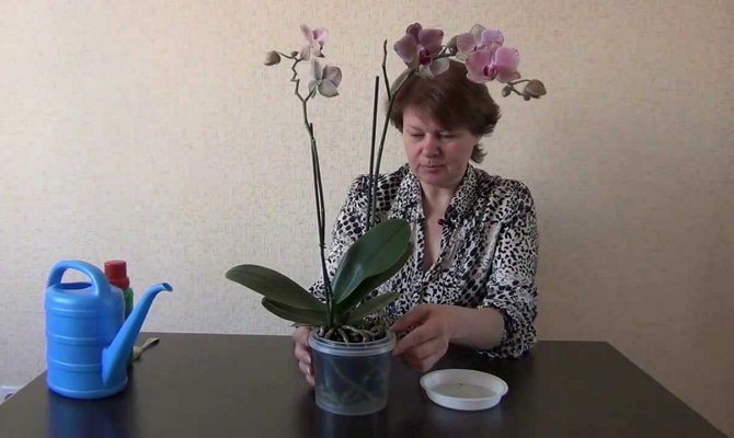 Нужна ли подкормка в период цветения?