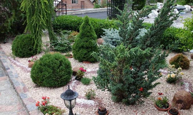 Особенности выращивания хвойных растений