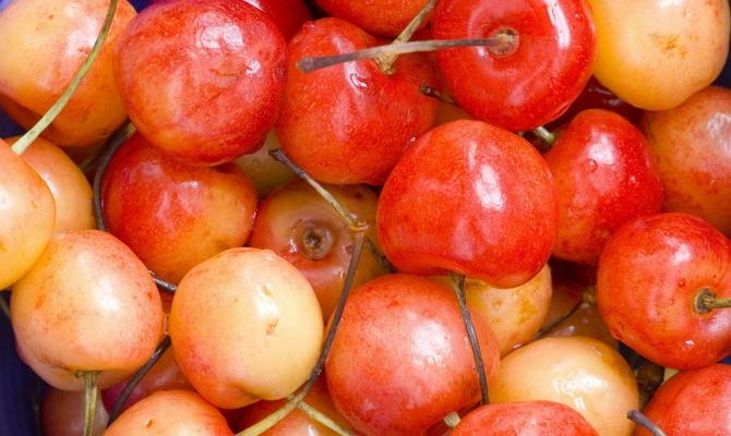 Урожайность – как добиться хорошего плодоношения?