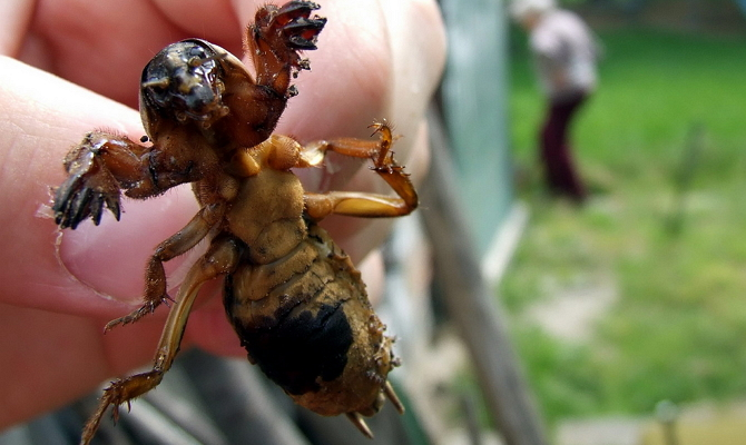 Как уничтожить насекомое, поселившееся на участке?