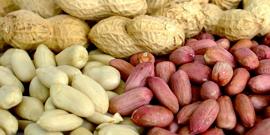 Всеми любимый сырой арахис – польза и вред земляного ореха