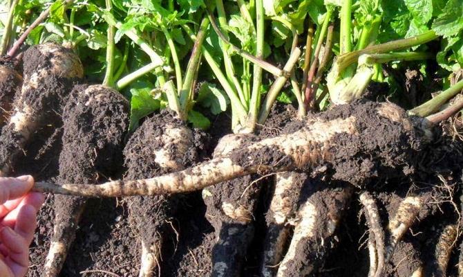 Подготовка почвы и семян – обеспечим себе урожай