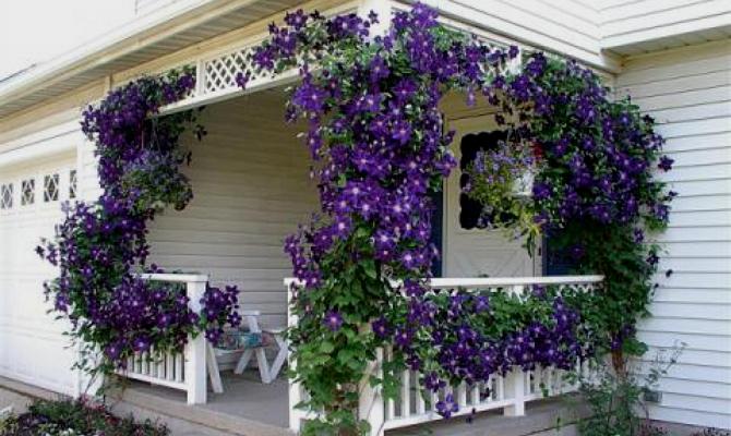 Какие растения и цветы выбрать?