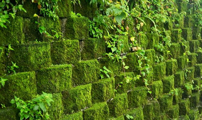 Мох для вертикального озеленения – как использовать?