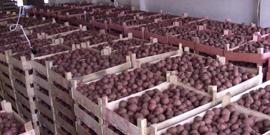Температура хранение картофеля в подвале и квартире – изучаем важные рекомендации