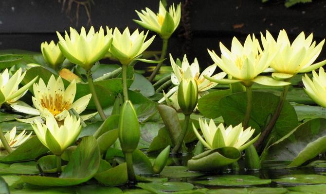 Тенелюбивые растения для выращивания