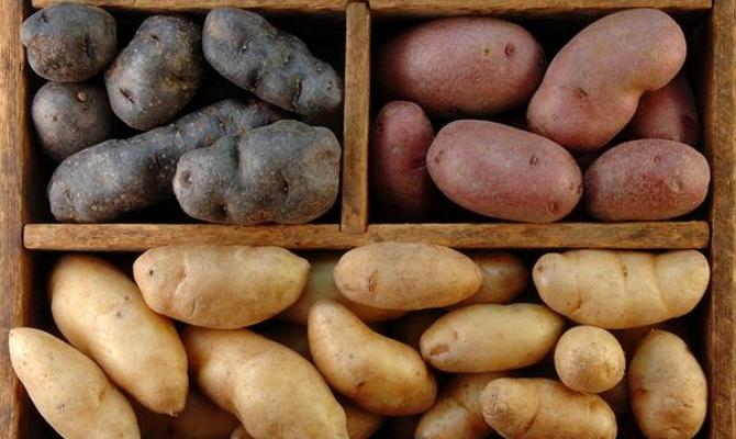 Как правильно хранить корнеплоды в погребе и подвале?