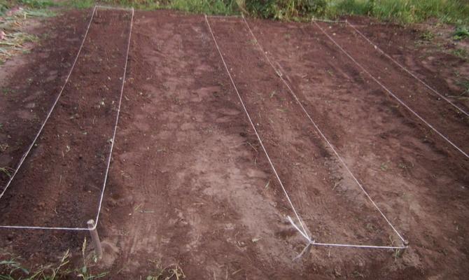 Посадка растений в открытый грунт – шаг за шагом