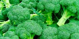 Капуста брокколи – посадка и уход для получения отличного урожая