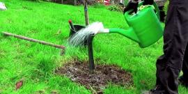 Подкормка деревьев весной – изучаем правила внесения удобрения