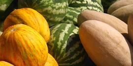 Посадка арбузов и дынь – как вырастить пьяняще-сочные плоды у себя в теплице?