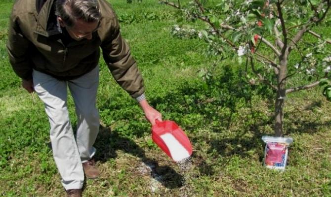 Корневое «питание» деревьев – о чем нужно помнить?